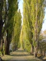 並木道のイメージ